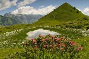 Obertal Maienfelder Alp - Werner Legler