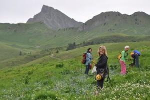 Wildkräuterexkursion mit Yvonne Bollinger 2017